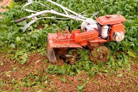 Bỏ phố về rừng trồng rau